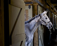 Stallion (REOGA) Tags: photostream
