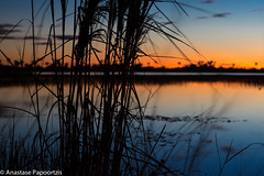 From Dusk till Dawn (anastase.papoortzis) Tags: blue sunset brazil sky lake water brasil clouds landscape lago pond amazon dusk natureza paisagem savannah bluehour goldenhour amazonian juncos roraima savana savannas roraimense