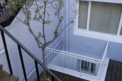 Blue (flurryofsmoke) Tags: blue england abstract tree london unitedkingdom downstairs nottinghill