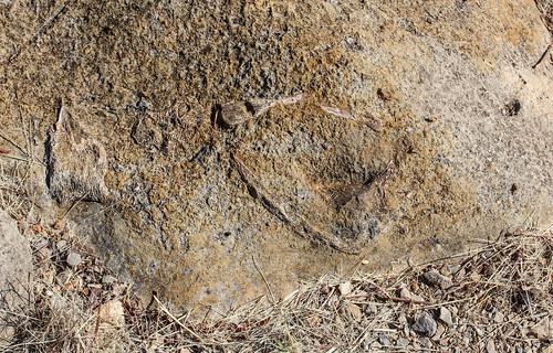 Fossils of 'Big Bird', Riversleigh