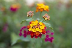 _MG_1625 (Arthur Pontes) Tags: parque flores flower verde green primavera nature spring natureza small flor pequeno colorido