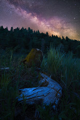 Silent Splendor (redblur) Tags: california longexposure camping trees nature grass night stars landscape log meadow redding milkyway hipcamp