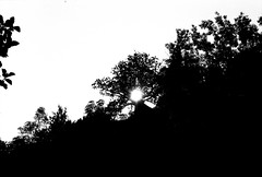 Sun is the warmest color (Tamar Burduli) Tags: blackandwhite monochrome sun nature landscape trees forest park sunset sky travel dark black portugal porto tamarburduli analog film 35mm outdoor