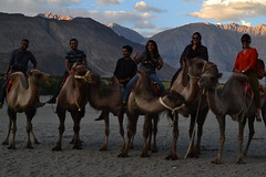 DSC_0049 (sootix) Tags: sand camelride bactriancamel