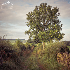 Bygone Days (.Brian Kerr Photography.) Tags: edenvalley cumbria landscapephotography tree old painterly briankerrphotography sonyuk a7rii availablelight colour