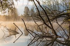 Mirror (Role Bigler) Tags: aare aaretal baum canoneos5dsr mist natur nature nebel riveraare schweiz suisse switzerland tamronsp45mmf18divcusdf013 tree wasser fog river rubigen water
