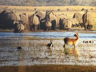 Namibia Dangerous Game Safari - Caprivi Strip 87