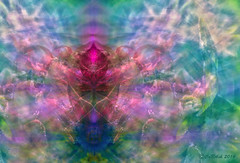 Ascending (CaBAsk! on and off. Thank U for the visit ) Tags: abstract art ascending olympus photoshop digital manipulation expression spirit serenity dimensions colors bright levels flowers tree angel bubble fantasy imagination spheres web matrix outdoor artdigital