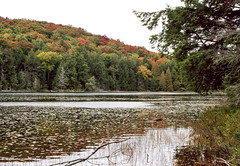 Overcast Jackson Lake II_ (Bill Smith1) Tags: asahipentaxkx believeinfilm billsmithsphotography fall2016 heyfsc jacksonlake lomo400c41 muskoka smcpentaxm50f14lenslens filmshooterscollective
