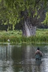 Tranquility Amongst The Mayhem (paulinuk99999 - just no time :() Tags: paulinuk99999 bushy park fishing heron fisherman red deer rut calm relaxing london royal sal70400g