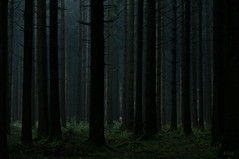 Trees and obscurity (K.rar) Tags: tree trees arbre arbres nature green vert paysage landscape naturel natural obscurity obscurité sombre dark darkness obscur ombre shadow vertical verticality light lumière lueur glow