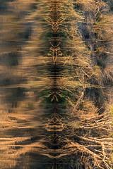20160825_ZambeziReflectionsPortraits_MCM-3 (mcmessner) Tags: abstract africa bjadventures morning morningboatride reflection rorschak southafrica2016 sunrise tongabezilodge water zambeziriver zambia livinstone