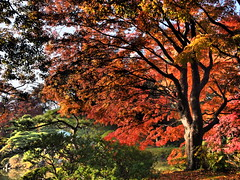 red leaves (alejo_palacios1022) Tags: leica summilux 15mm dg f17 epl7