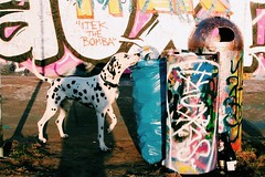 (windysmiles) Tags: street sunset urban dog white streetart black color berlin colors animals cane trash germany deutschland graffiti tiere afternoon sonnenuntergang tram happiness hund berlinwall rubbish trashcan farbe colori weiss bianco nero schwarz dalmatian animali bunt prenzlberg germania prenzlauerberg coldwar mauerpark spazzatura berlinermauer untergang onto berlino dalmata pomeriggio nachmittag immondizia variopinto eberswalderstrasse macchie guerrafredda murodiberlino mlle