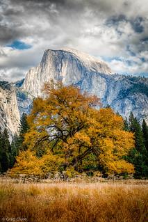 Yosemite's Tree of Life