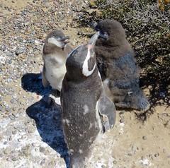 Puerto Madryn-63