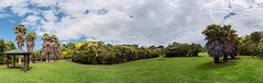 Just a Walk in the Park (duncan_mclean) Tags: park panorama pano wide reserve auckland devonport samyang14mm cambriareserve