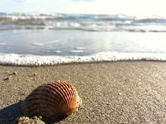 Let's go to the beach in november ! (Snwy Owl) Tags: trip november girls friends sea sun love beach nature high nice shell plage sud paix coquillage