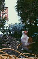 2014-10-29 02.55.56 1 (manos_kp) Tags: cat menta kifissia