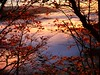 Sunset (blogspfastatt (+4.000.000 views)) Tags: wow nice nature landscape paysage light lumière swiatlo automne autumn season jesien herbst blogspfastatt pfastatt arbre tree landschaft earthday flickr georgesblaszczyk puestadesol sonnenuntergang tramonto paisaje twilight enjoyinglife