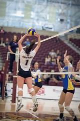 20141031MacEwanBrandon_RobertAntoniuik05 (macewanugriffins) Tags: woman canada sport female athletic edmonton indoor event alberta shorts athlete gym gymnasium spandex fit yeg womensvolleyball wvb citycentrecampus akasangudo photographerrobertantoniuk macewanuniversitygriffins brandonuniversitybobcats