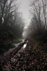 winter is a long journey (_wysiwyg_) Tags: trees winter cold wet fog countryside woods path hiver arbres melancholy puddles campagne froid brouillard chemin fort wooland mlancolie humide flaques boutduchemin endofthepathway