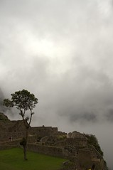 Hidden behind (Ewout van Sabben) Tags: travel tree peru southamerica inca clouds photography ruin machupicchu solitary