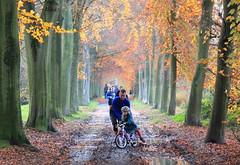 Domein Parkabdij Heverlee (Kristel Van Loock) Tags: autumn leuven automne belgium belgique drieduizend herfst belgië autunno belgica louvain heverlee flanders herfstwandeling belgien belgio domein 2014 löwen vlaanderen flandre 3001 vlaamsbrabant abdijvantpark lovanio parkabdij fiandre visitleuven leveninleuven seemyleuven november2014 domainedelabbayeduparc domainofparcabbey