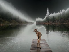 winter fog reflections december samsung deer whitetail... (Photo: Oma Darling Photography on Flickr)