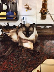 Filippo le chat