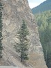 Tree Growing Out Of Rock (miggsgreene) Tags: park canada bc national kootney