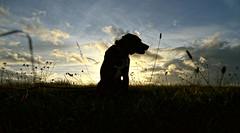 duke, photo enthusiastic dog, wishes all photographers nice holidays and always good light (joachim.d.) Tags: tan explore h