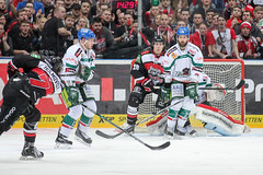 """DEL15 Kšlner Haie vs. Augsburg Panthers • <a style=""""font-size:0.8em;"""" href=""""http://www.flickr.com/photos/64442770@N03/16300504931/"""" target=""""_blank"""">View on Flickr</a>"""