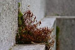DSC03216 (Kyle Becker) Tags: stone moss