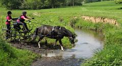Chester Horse Driving Trials Erddig 13 IMG_7163 (rowchester) Tags: horse water driving carriage chester trials erddig