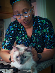 Loki home again, pt. 2 (robynmichelle79) Tags: animal cat loki robyn ragdoll