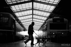 Walk The Dog (gheckels) Tags: street urban bw dog streetart portugal train blackwhite europe noir lisboa lisbon candid streetphotography trainstation walkthedog carlzeiss leadinglines travelphotography sonyimages sonya7rii heckelsstreetphotography graemeheckelsphotography