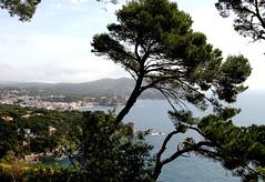 PAISAJE VISTO DESDE LOS JARDINES DE CAP ROIG (Joan Biarnés) Tags: paisaje girona catalunya costabrava 199 paisatge calella baixempordà caproig canon7d