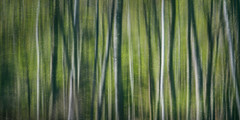 Wild Woods (Brian Truono Photography) Tags: longexposure trees light abstract motion blur green texture nature leaves forest landscape nationalpark movement woods natural nps doubleexposure fineart maine birch nationalparkservice acadia icm fineartphotography jordanpond cameramovement whitebirch