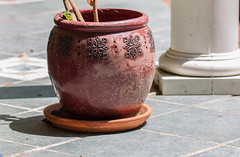Potted (Gabriel FW Koch) Tags: red orange brown sun sunlight white plant black green lines canon garden tile outside eos dof bokeh outdoor patterns 100mm pot glossy porch flowerpot column reddish