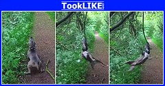 น้องหมาชอบกัดไม้แล้วแกว่งเป็นวงกลม (tooklikedotcom) Tags: กัดไม้ สุนัข แกว่งเป็นวงกลม