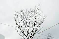 The tree has died, the sky is grey (iheresss) Tags: bangkok f14 sony 85mm carlzeiss manuallens planart a7r