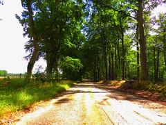 Wald bei Nieklitz (Sophia-Fatima) Tags: field forest walking deutschland walk felder wald spaziergang mecklenburgvorpommern spazieren reitweg nhezarrentin nieklitz