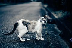 DSC06770 2 (hyeonseokoo) Tags: cat