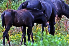 IMG_0505 (ryancarter2012) Tags: horse baby menorca cala galdana