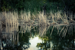 Richfield Lake (michaelraleigh) Tags: lake reflection green minnesota canon landscape outdoors serene secluded infocus 200mm highquality f28l