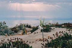 Strange sunset (mougrapher) Tags: sea seascape vsco flower flowers sunset tramonto mare sky cloud clouds fiori italia italy nature natura sand sabbia