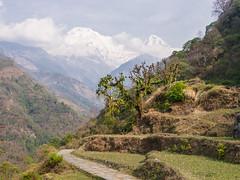 Trail near Landruk (faj2323) Tags: annapurnasouth bhirkuna hiunchuli landruk npl nepal pashchimanchal trail