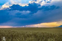 IMG_8578 (larzz4444) Tags: chester montana winterwheat chestermontana gleaner drylandfarming sweatgrasshills joplinmontana wheatharvest sunset