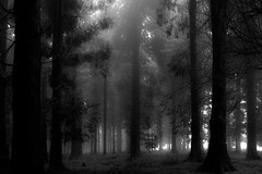 Fog and rain (joseba71) Tags: bosque arbol tree vilage niebla fog lluvia rain gorbea parquenatural nature naturaleza landscape paisaje paisvasco espaa euskadi euskalherria gorbeia xpro1 fuji